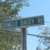 dingledaisy